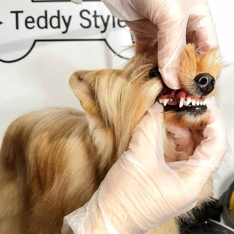 ультразвуковая чистка зубов собак